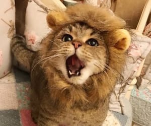animal, baby, and roar image