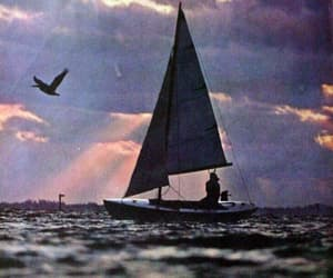 birds and sailing image