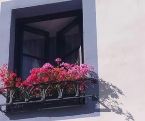 fenetre, soleil, and Fleurs image