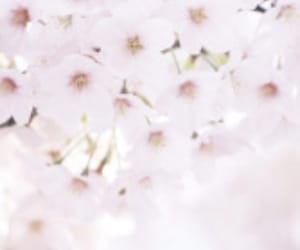 aesthetic, cute, and blossom image
