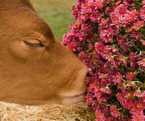 animal, flowers, and cute image