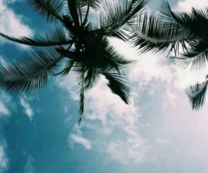 palm trees, sky, and beach image