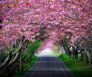 beautiful, walking, and place image