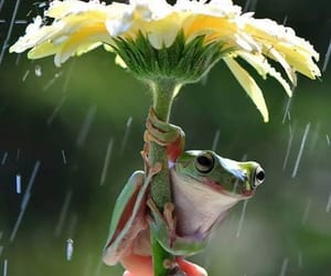 animals, flower, and rain image