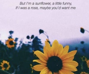 background, wallpaper, and sunflower image