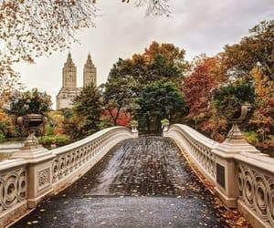 bridge, trees, and fall season image