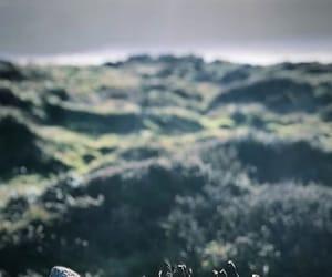highlands, ireland, and nature image