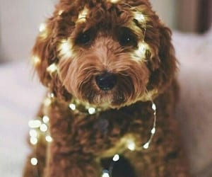 adorable, fairy lights, and puppy image