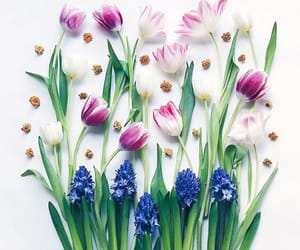 flowers, pastel, and tulip image