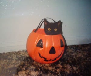 cat, Halloween, and spooky image