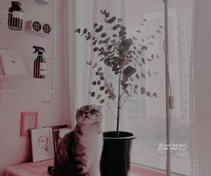 aesthetic, plant, and cat image