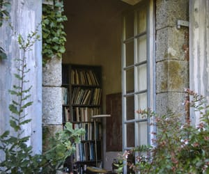 book, plants, and window image
