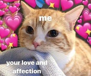 meme, love, and cat image
