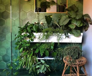 green, plants, and room image