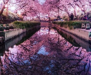nature, beautiful, and pink image