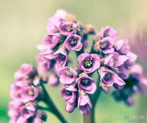 flower, lilac, and new born image