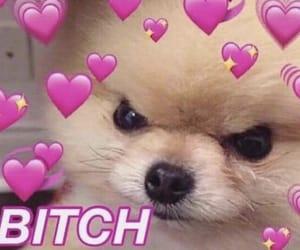 dog meme, heart meme, and heart reactions image
