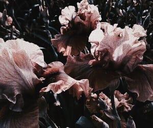 aesthetic, tumblr, and aesthetics image