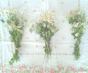 bouquet, dreamy, and flower image