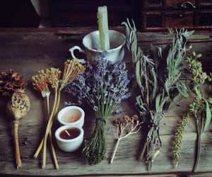 witch, herbs, and candle image