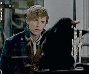gif, hp, and fantastic beasts image