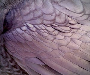 purple, wings, and aesthetic image