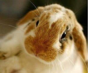 Animales, conejo, and mascota image