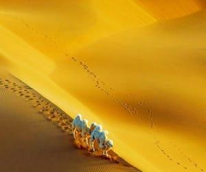 animal, animals, and camel image