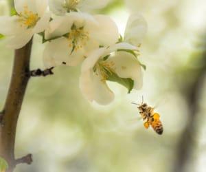 beautiful, bee, and bumble bee image