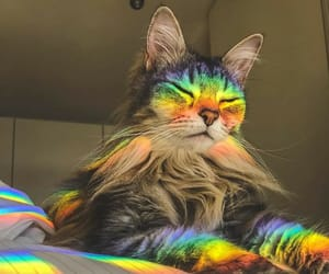 cat, cats, and rainbows image