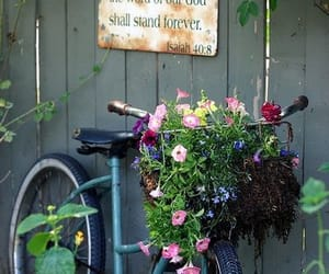 bicycle, flowers, and garden image