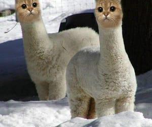 cat, meme, and shitpost image