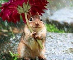 flowers, rain, and animal image
