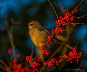 Animales, pajaros, and photography image