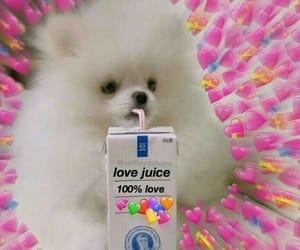 meme, dog, and heart image