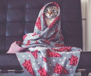 animals, kitten, and love image