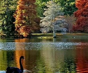 beauty and nature image