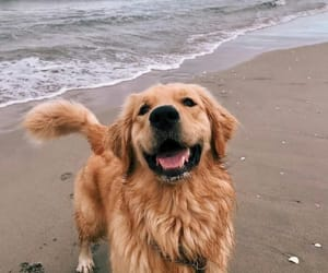 dog, animal, and beach image