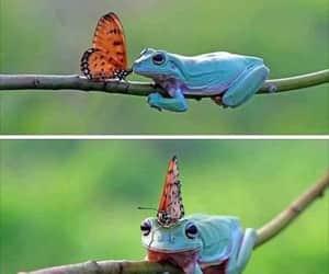 Animales and naturaleza image