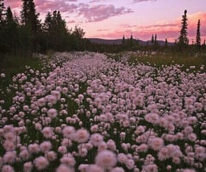 flowers, pink, and sky image