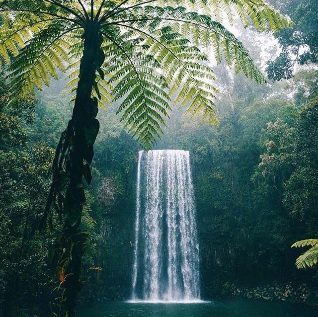 bali, hawaii, and jungle image