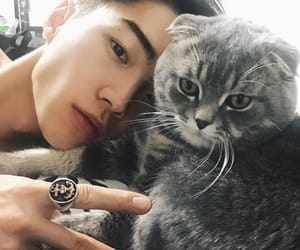 boy, cat, and ulzzang image