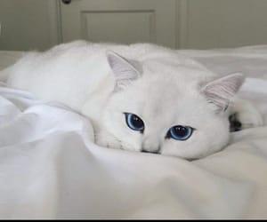 cat, white, and animal image