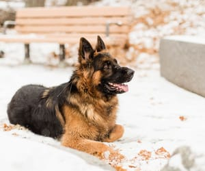 dogs, snow, and cute image