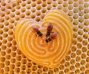 honey, bee, and theme image