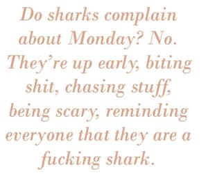 monday, people, and sharks image