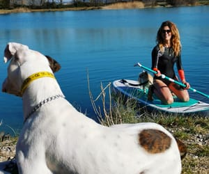 dog, paddle, and happy moment image