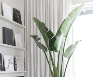 design, green, and décoration image