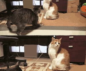 cat and gif image