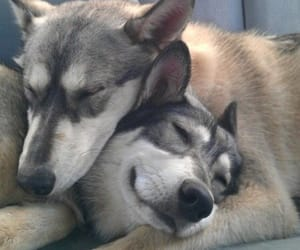 brothers and wolf image